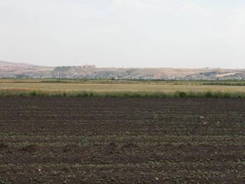 Qalaat el Moudiq, la citadelle d'Apamée, vue depuis la plaine de l'Oronte. Vue vers le nord-est. Photo mission archéologique de Qalaat el Moudiq, citadelle d'Apamée